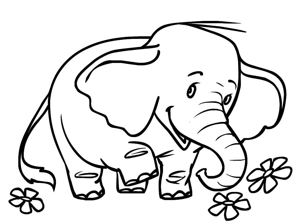Раскраска Игривый Слоник . Скачать слон.  Распечатать Дикие животные