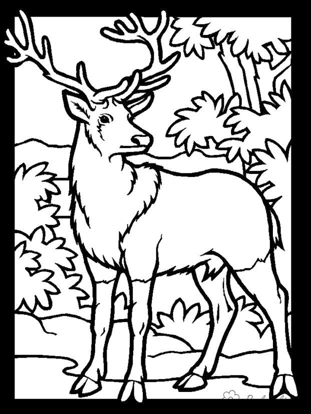 Раскраска  Лесные животные  для детей, большерогий олень, лес, природа. Скачать Олень.  Распечатать Дикие животные