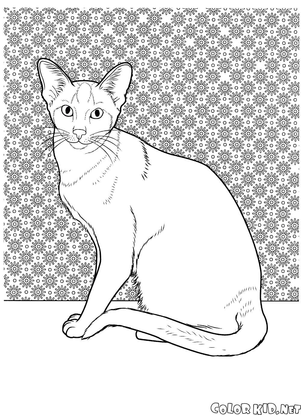 Раскраска Сиамская порода кошки. Скачать кошка.  Распечатать кошка