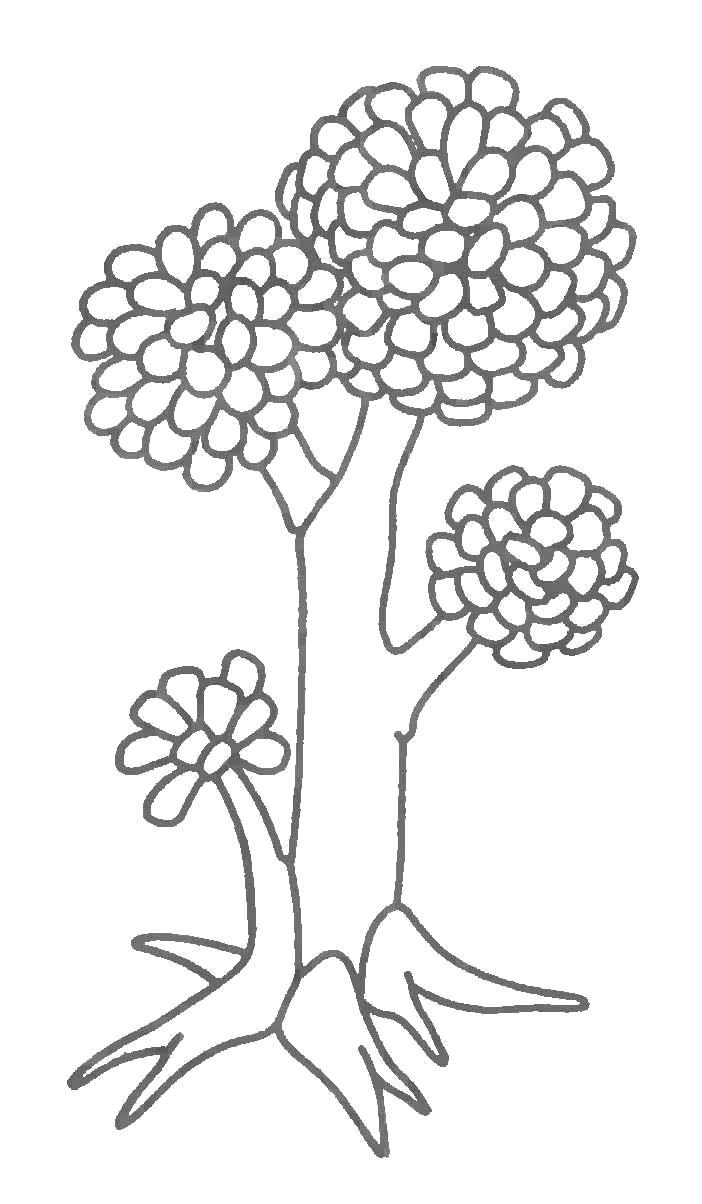 Раскраска Волшебное дерево. Скачать .  Распечатать