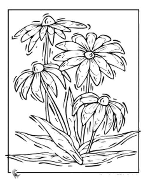 Раскраска  Растущие цветы. Скачать .  Распечатать
