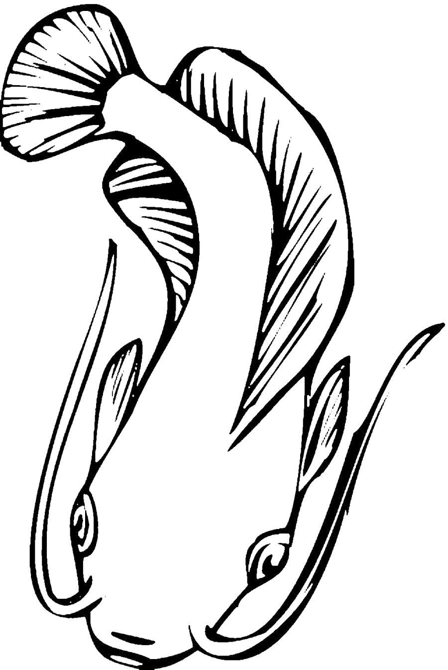 Раскраска Сом с длинными усами, рыба. Скачать .  Распечатать