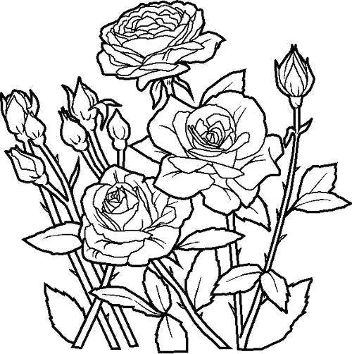 Раскраска Розы расцвели. Скачать Цветы.  Распечатать Цветы