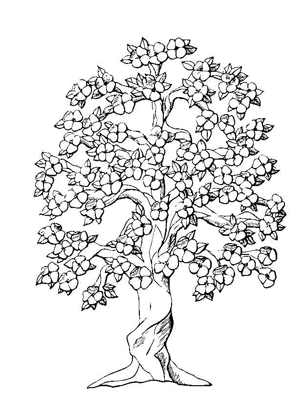 Раскраска красивое дерево. Скачать Весна.  Распечатать Весна