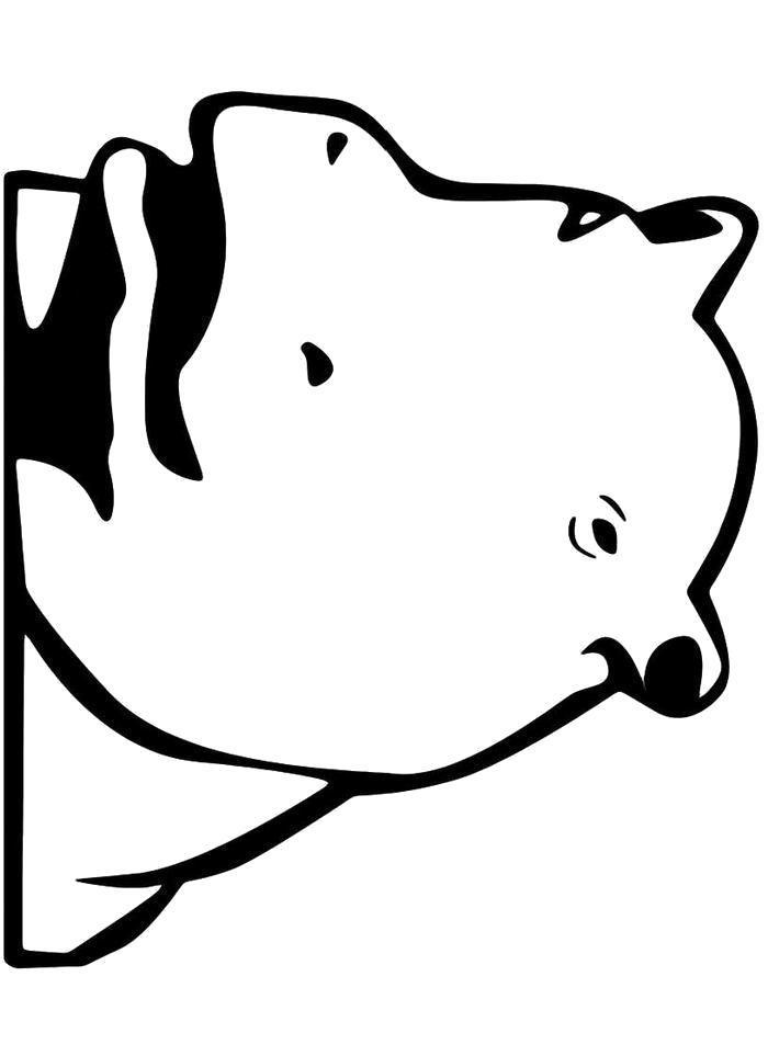 Раскраска  Голова бегимота. Скачать бегемот.  Распечатать бегемот