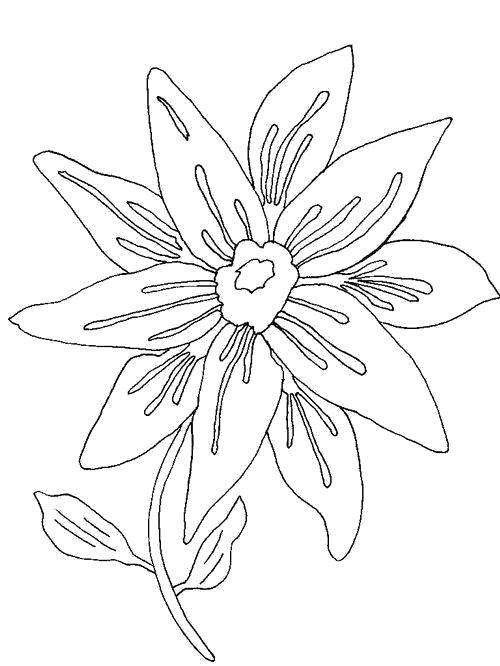 Раскраска  Яркий цветок. Скачать Цветок.  Распечатать Цветок