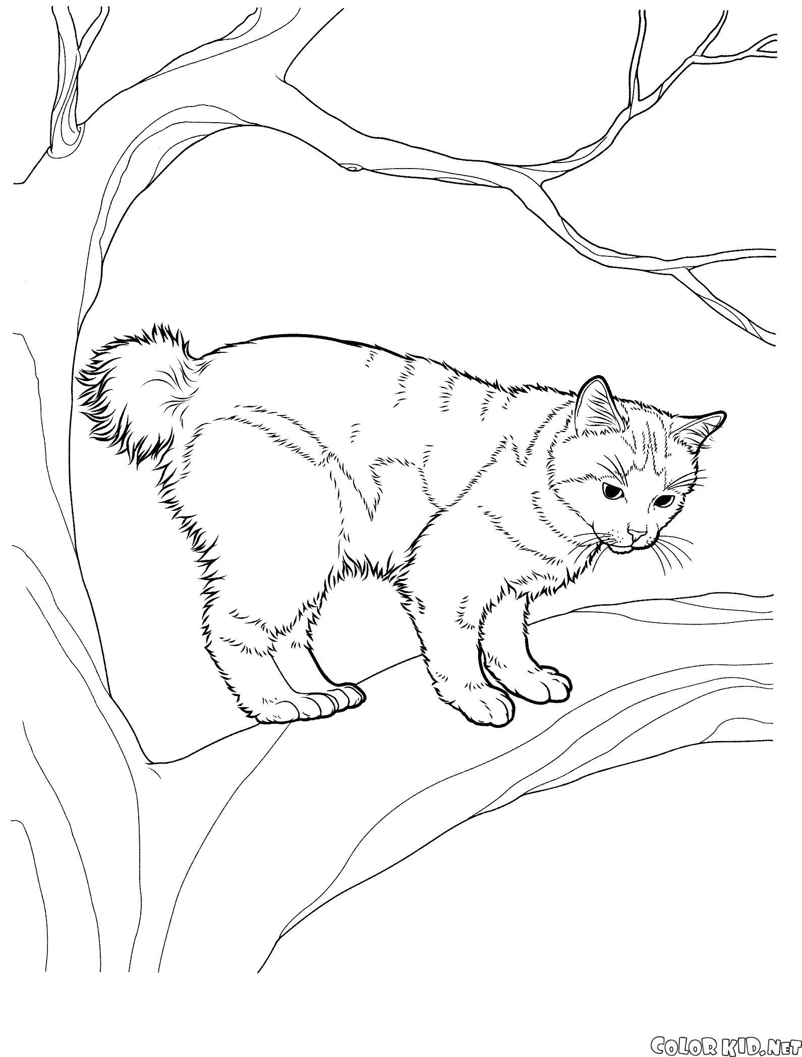 Раскраска Японский бобтейл. Скачать кошка.  Распечатать кошка