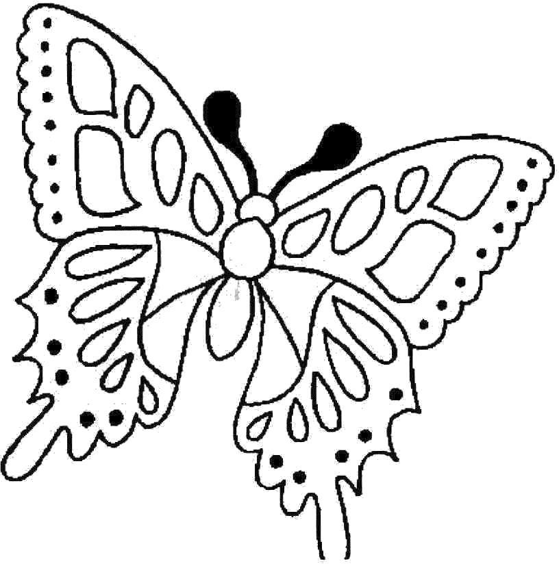 Раскраска Весенняя бабочка. Скачать .  Распечатать