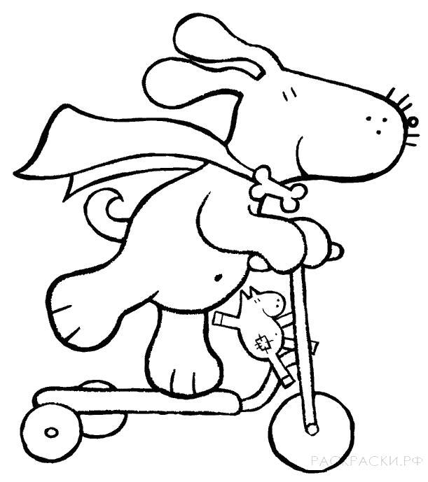 Раскраска  для мальчиков Собака на самокате. Скачать Собака.  Распечатать Собака