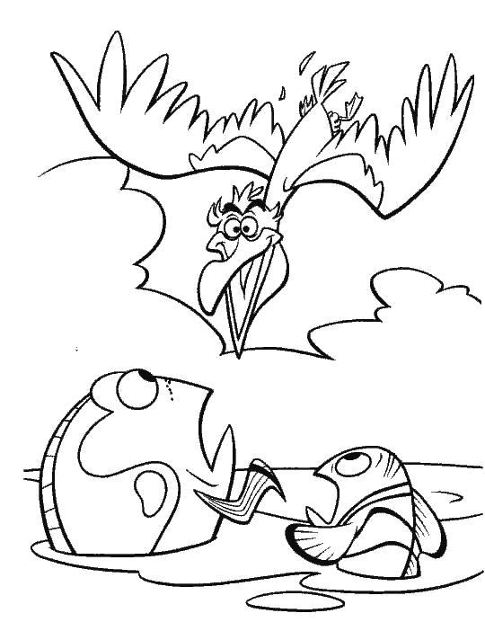 Раскраска Бешеная птичка  В Поисках Немо. Скачать немо.  Распечатать немо