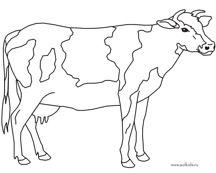 Раскраска  Корова. Скачать Корова.  Распечатать Домашние животные
