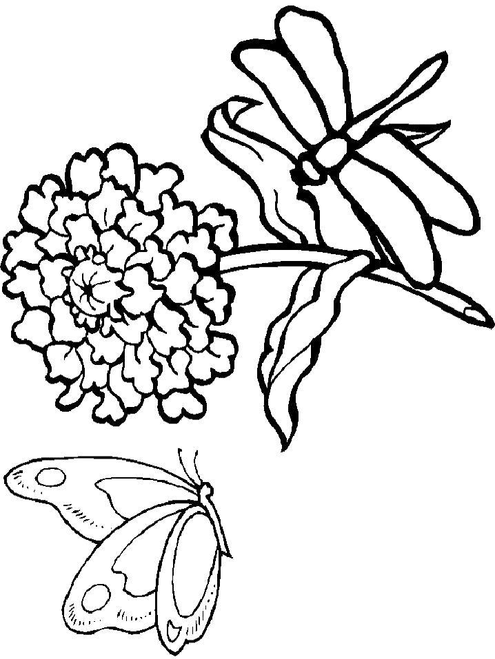 Раскраска Стрекоза и бабочка и цветок. Скачать Стрекоза, Бабочки.  Распечатать Насекомые