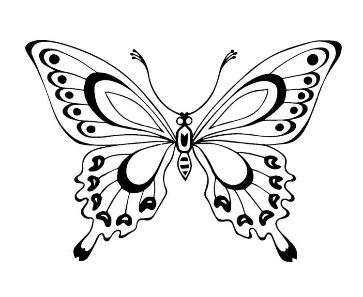Раскраска красивая бабочка. Скачать Бабочки.  Распечатать Бабочки