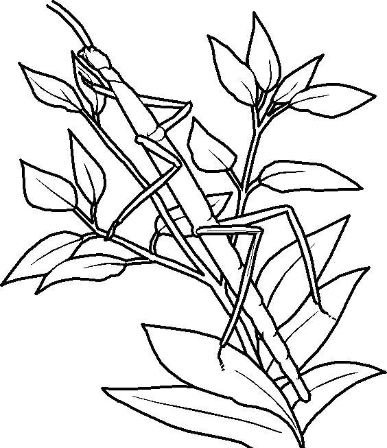 Раскраска Палочник маскируется в траве. Скачать Палочник.  Распечатать Насекомые