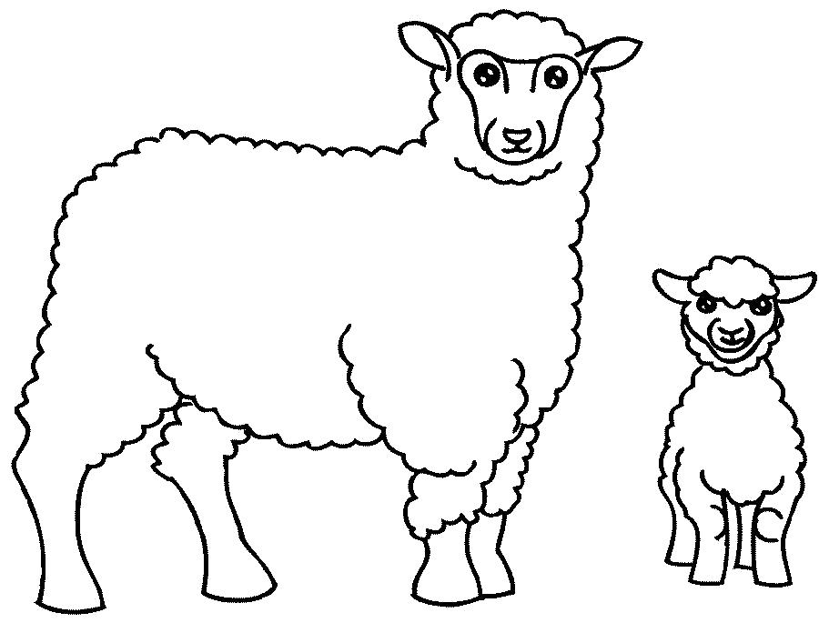 Раскраска Овца и овечка. Скачать Овца.  Распечатать Домашние животные