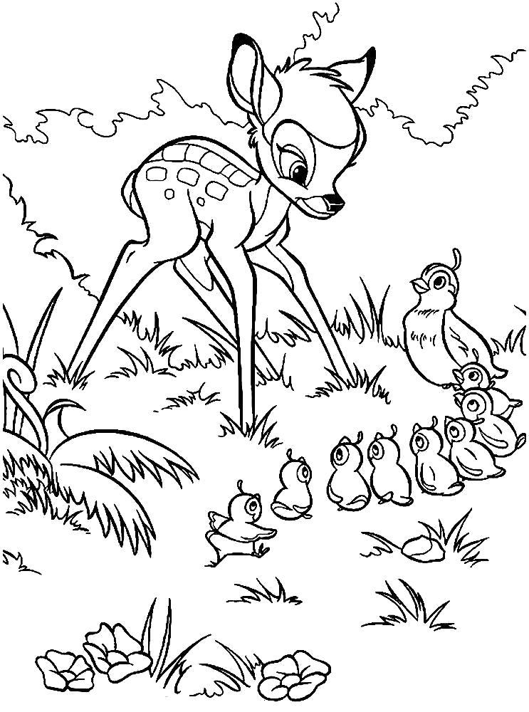 Раскраска Бэмби и птенчики. Скачать Бэмби.  Распечатать Бэмби