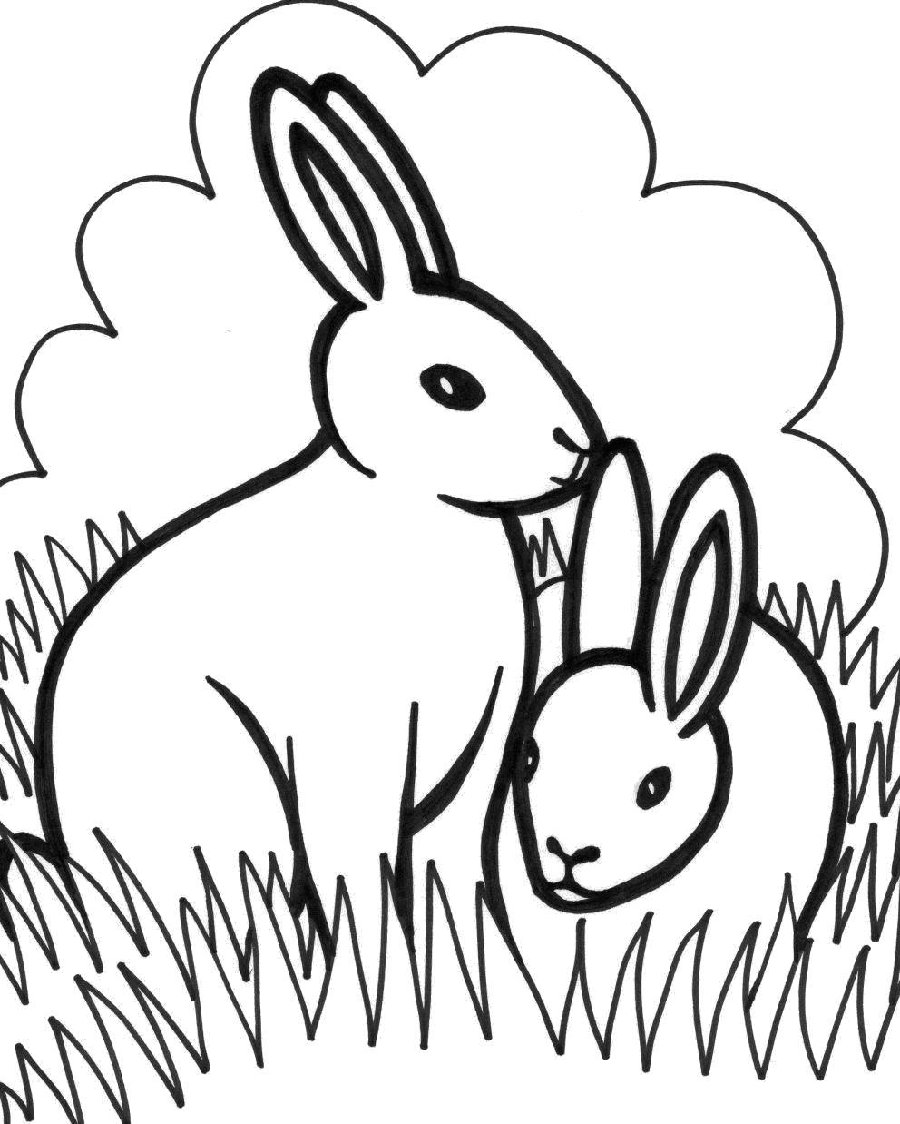 Раскраска Заяц . Скачать Заяц.  Распечатать Дикие животные