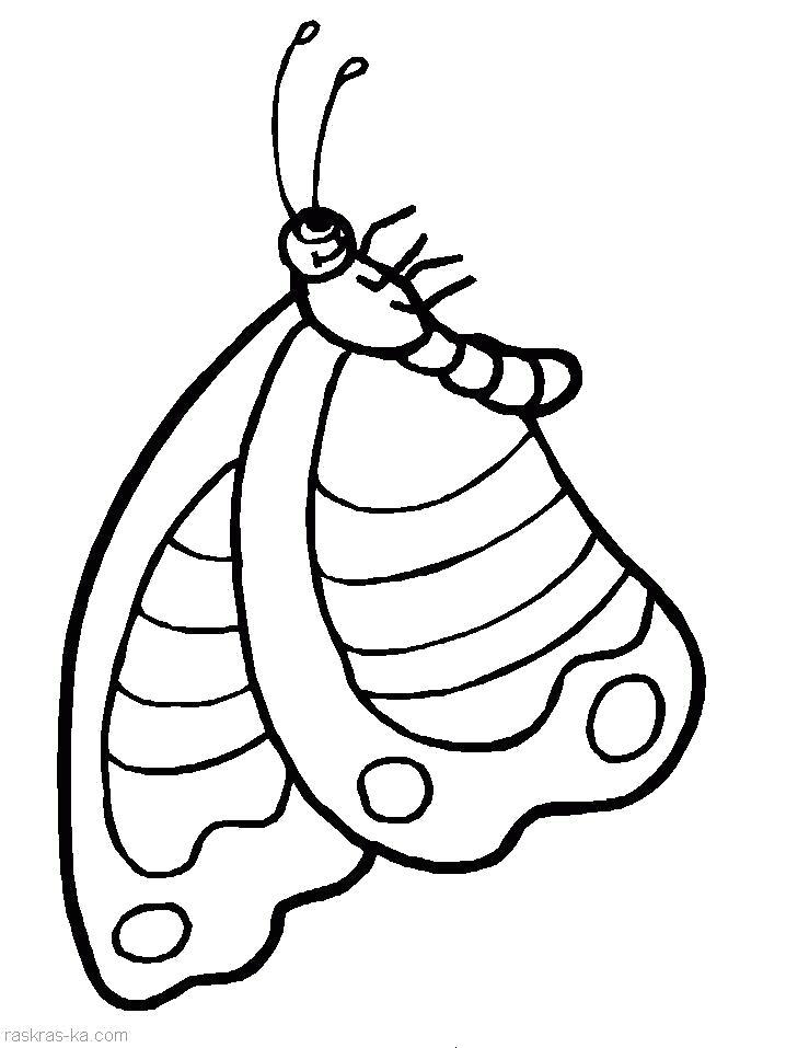 Раскраска Раскрашка бабочка. Скачать Бабочки.  Распечатать Бабочки