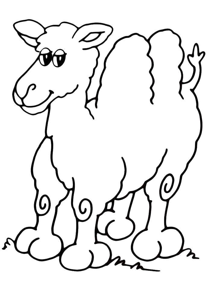 Раскраска  Верблюд улыбается. Скачать Верблюд.  Распечатать Дикие животные