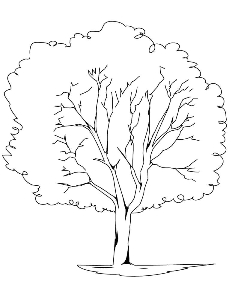 Раскраска береза. Скачать дерево.  Распечатать дерево