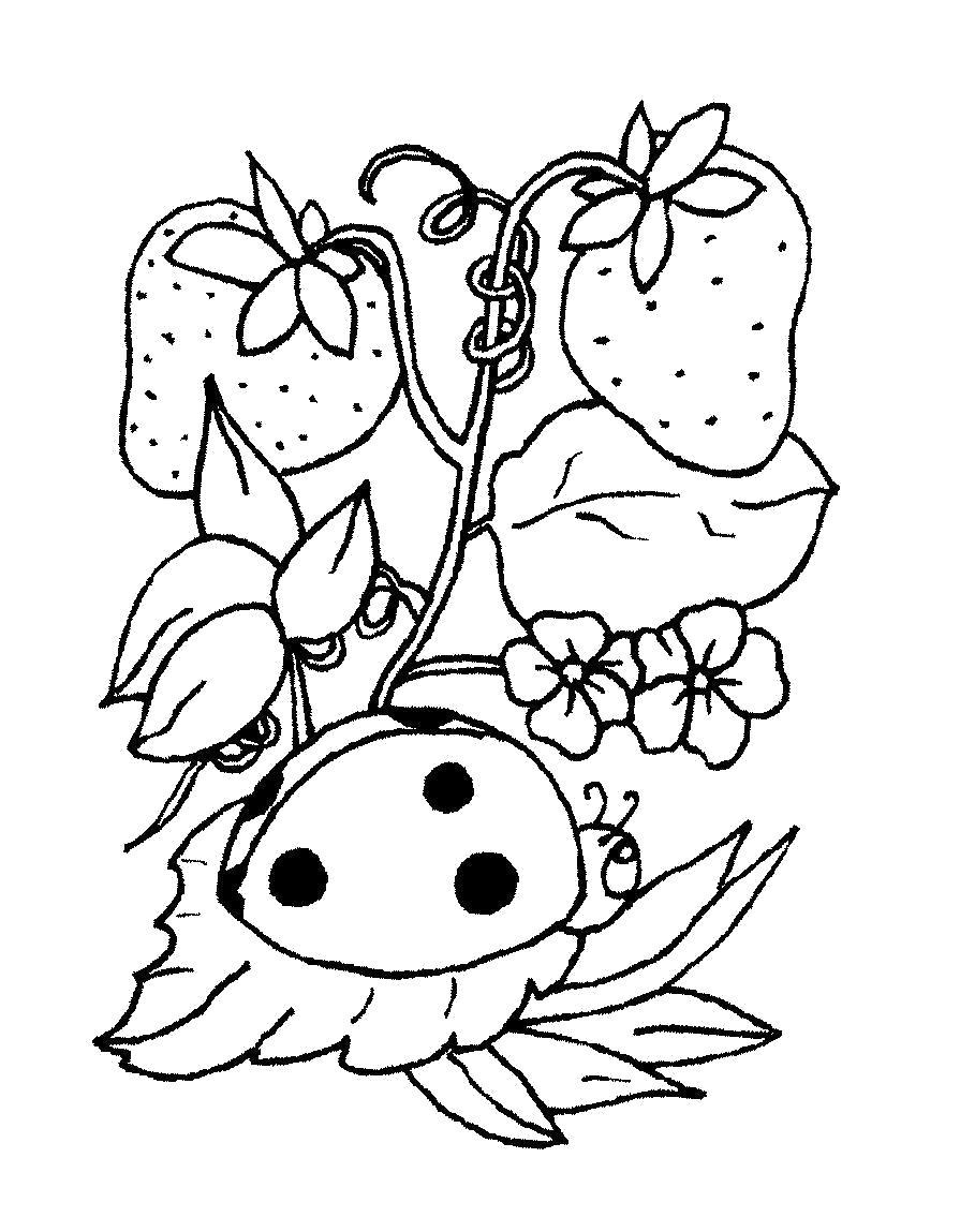 Раскраска  растения детская  растения, земляника,  цветочки,  божья коровка . Скачать земляника.  Распечатать ягоды