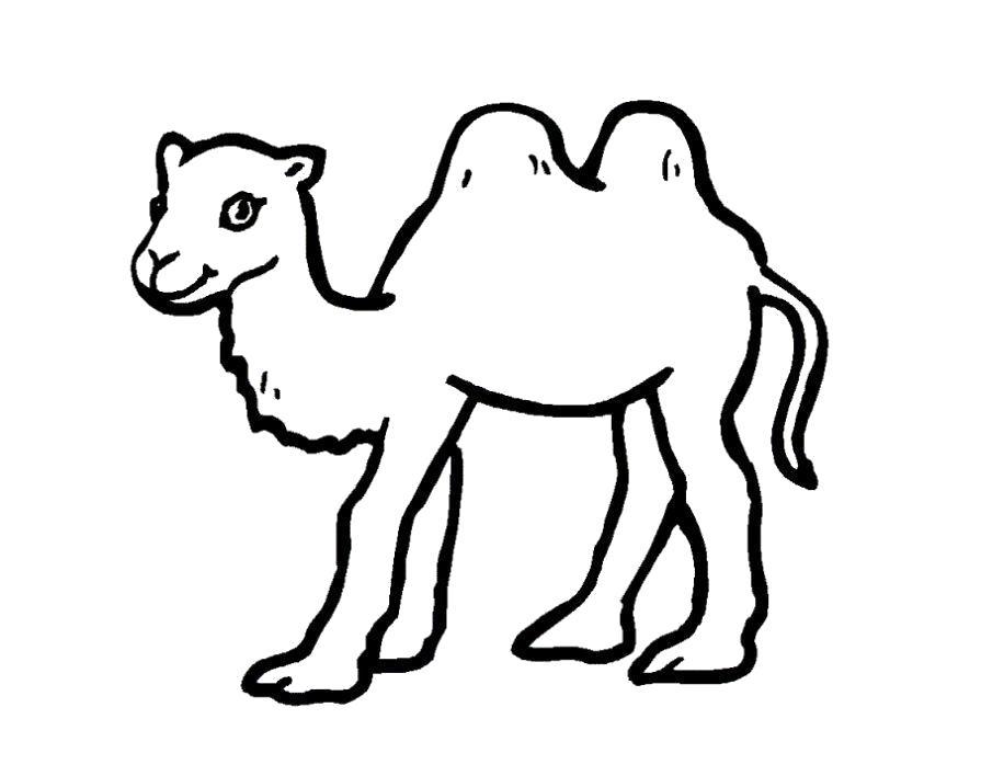 Раскраска  верблюжонок. Скачать Верблюд.  Распечатать Дикие животные