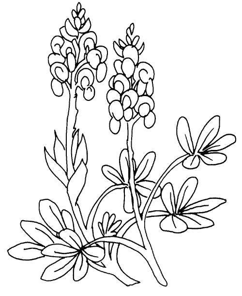 Раскраска  Цветочные грозди. Скачать Цветы.  Распечатать Цветы