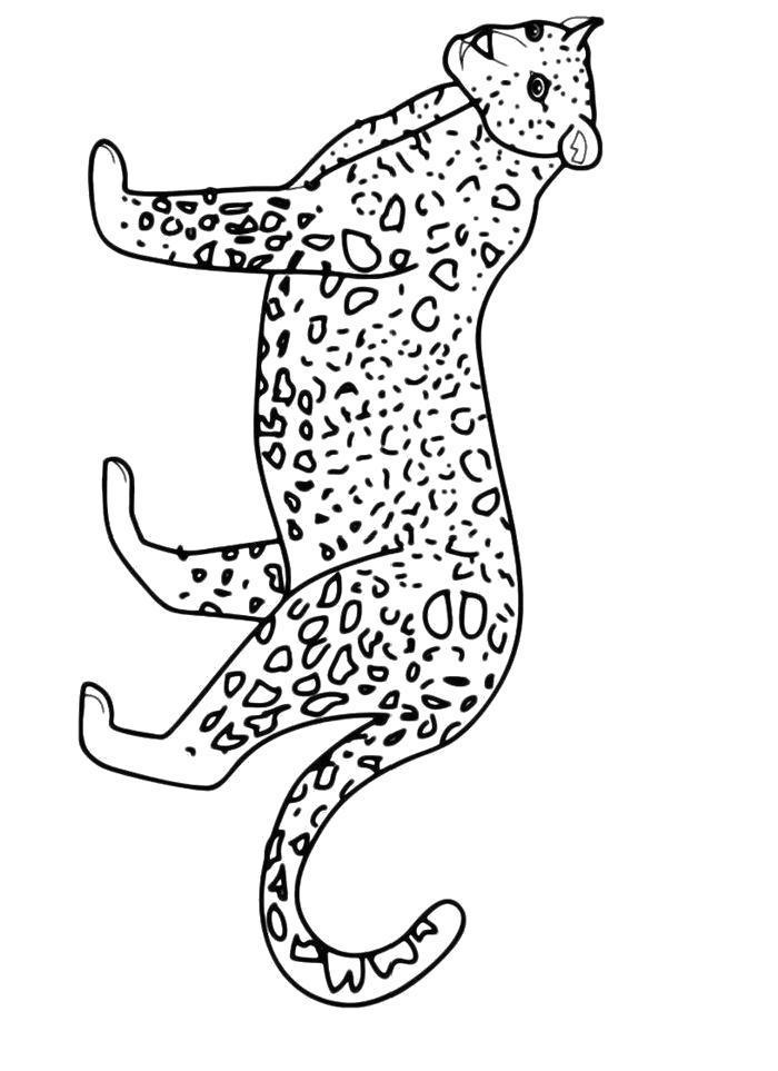 Раскраска  Пятнистый леопард. Скачать леопард.  Распечатать леопард