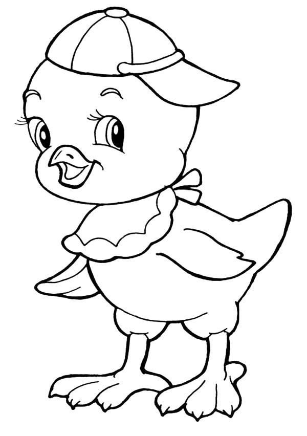 Раскраска Цыпленок в кепке. Скачать Цыпленок.  Распечатать Цыпленок