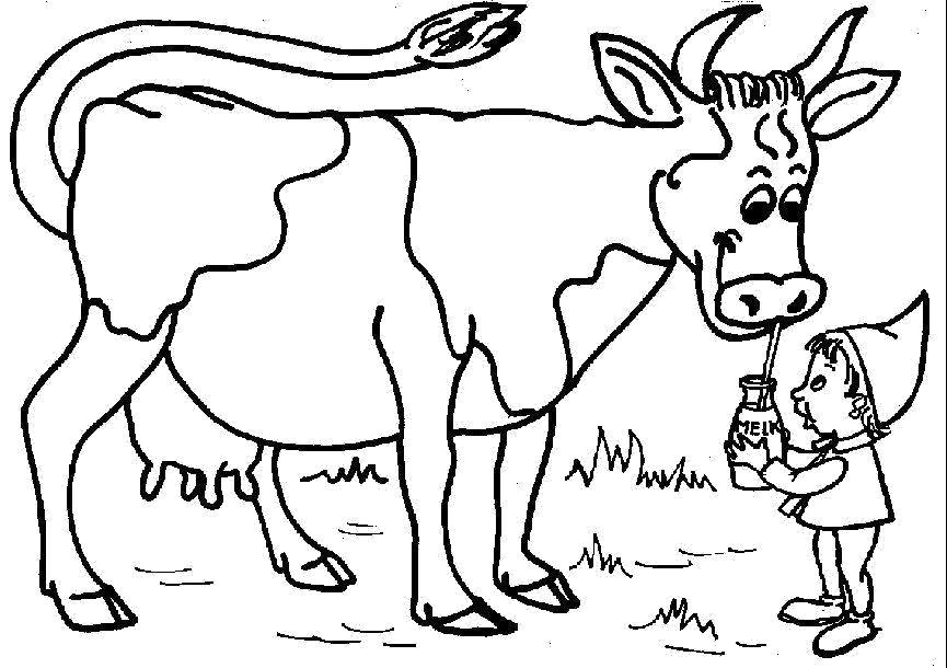 Раскраска корова и молоко. Скачать Корова.  Распечатать Домашние животные