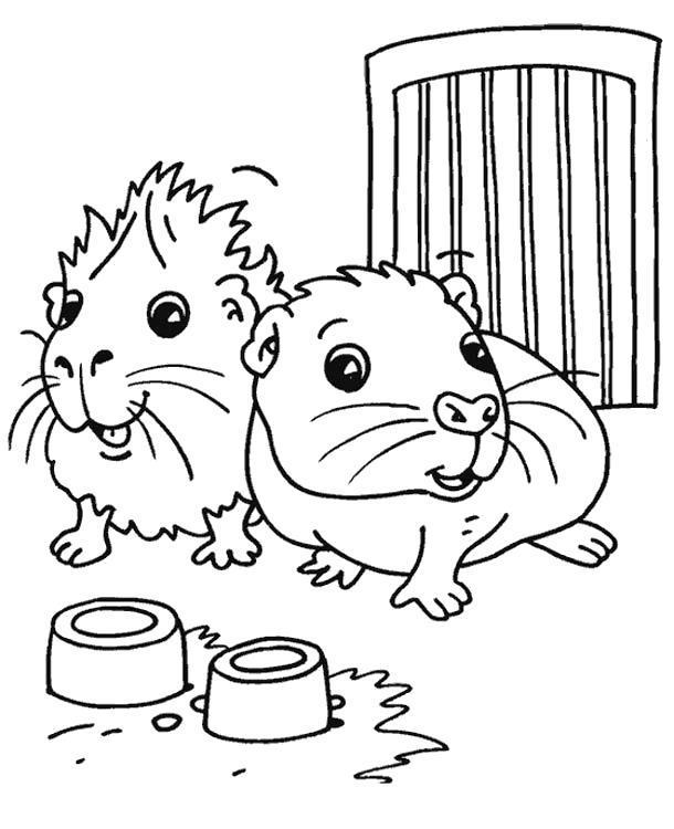 Раскраска Смешные морские свинки. Скачать .  Распечатать