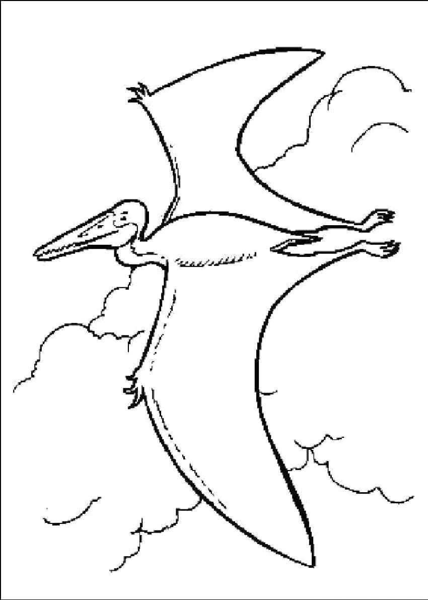 Раскраска  Динозавр с крыльями. Скачать динозавр.  Распечатать динозавр