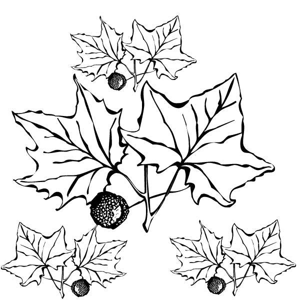 Раскраска  на тему осень золотая для детей распечатать бесплатно . Скачать Осень.  Распечатать Осень