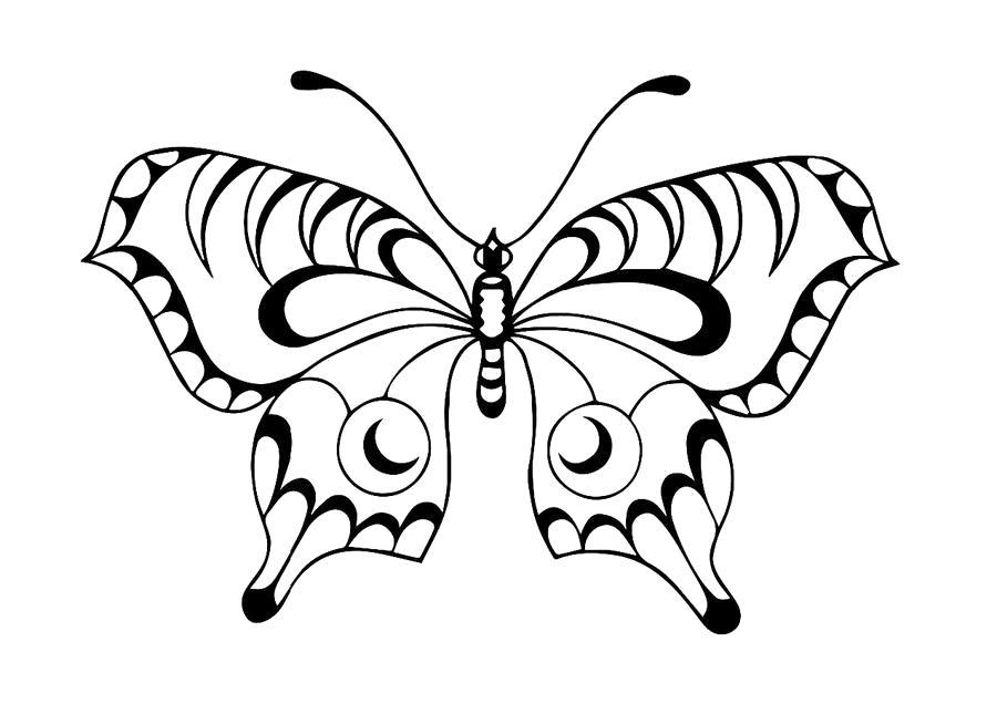 Раскраска бабочка трафарет. Скачать Бабочки.  Распечатать Бабочки