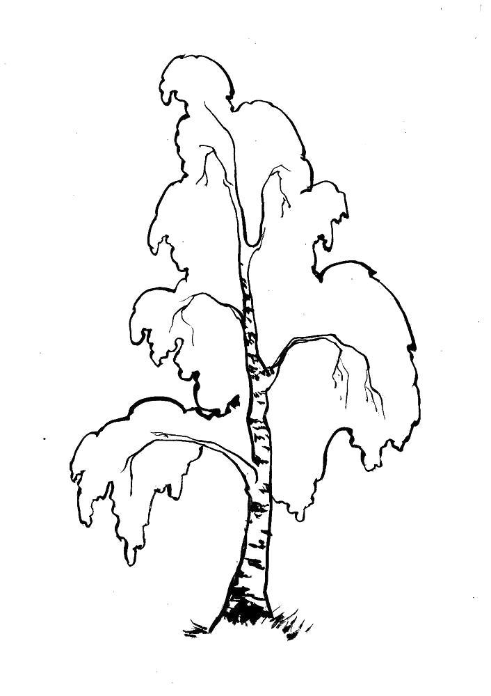 Раскраска  береза. Скачать деревья.  Распечатать деревья