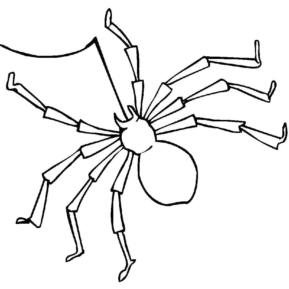 Раскраска  паук. Скачать Паук.  Распечатать Паук