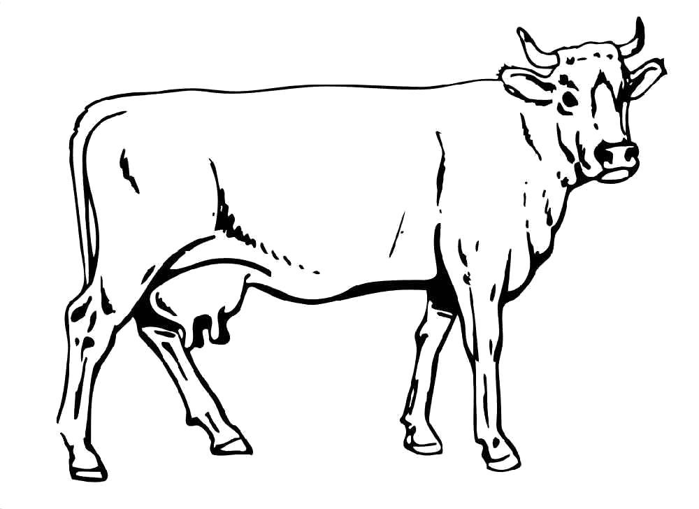 Раскраска Коровка. Скачать животных.  Распечатать животных
