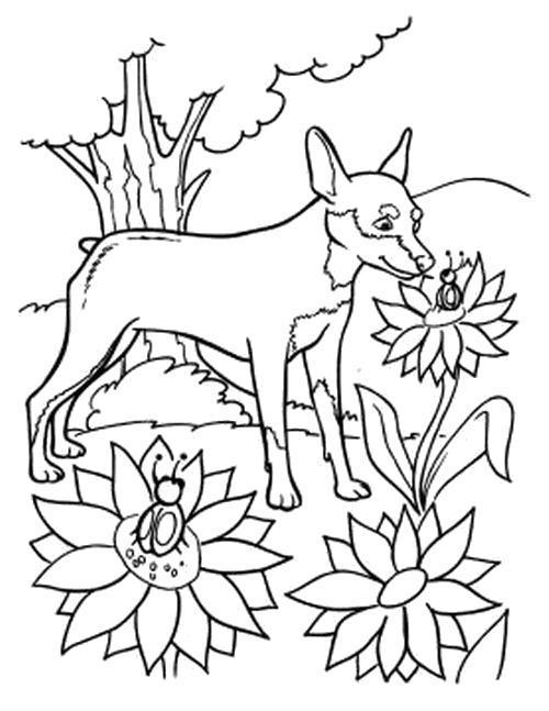 Раскраска  Собачка нюхает цветы. Скачать Цветы.  Распечатать Цветы