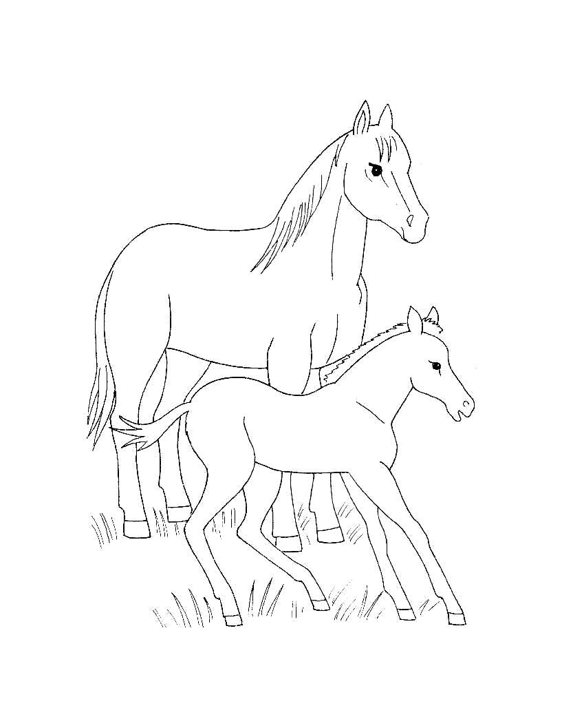 Раскраска  для самых маленьких  Домашние животные. Лошадь и жеребенок. Скачать Лошадь.  Распечатать Домашние животные