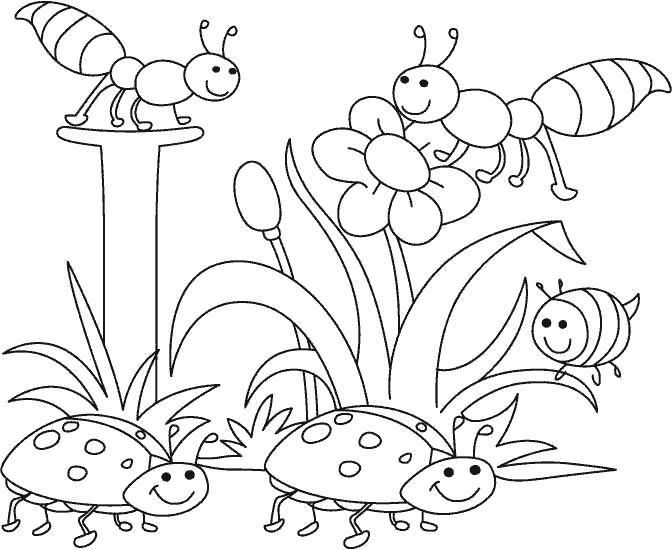 Раскраска ракраска божьи коровки. Скачать Пчела, Божья коровка.  Распечатать Насекомые