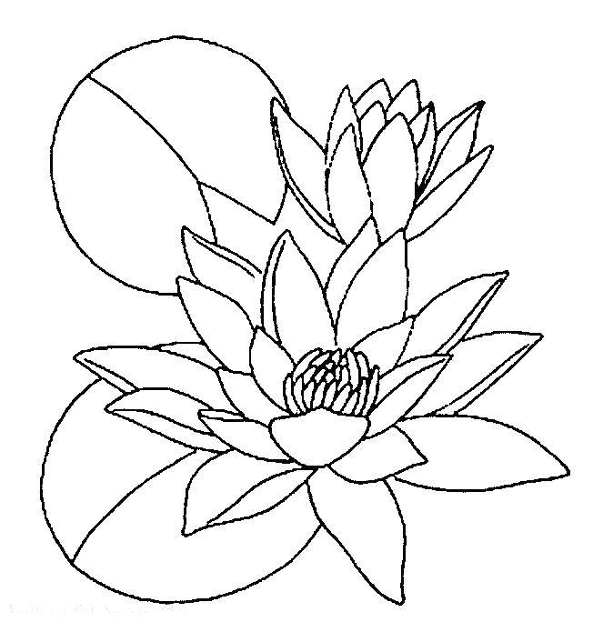 Раскраска  трава лотос цветок трава растение цветет душистый. Скачать цветы.  Распечатать растения