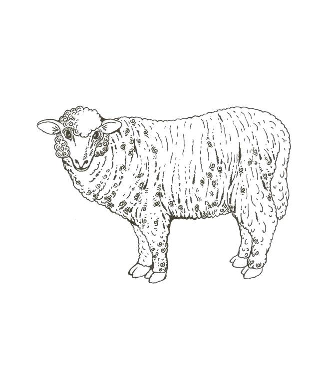 Раскраска Домашнее животное овца. Скачать Овца.  Распечатать Домашние животные