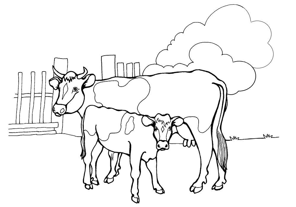 Раскраска  корова с телёнком. Скачать Корова, Теленок.  Распечатать Домашние животные