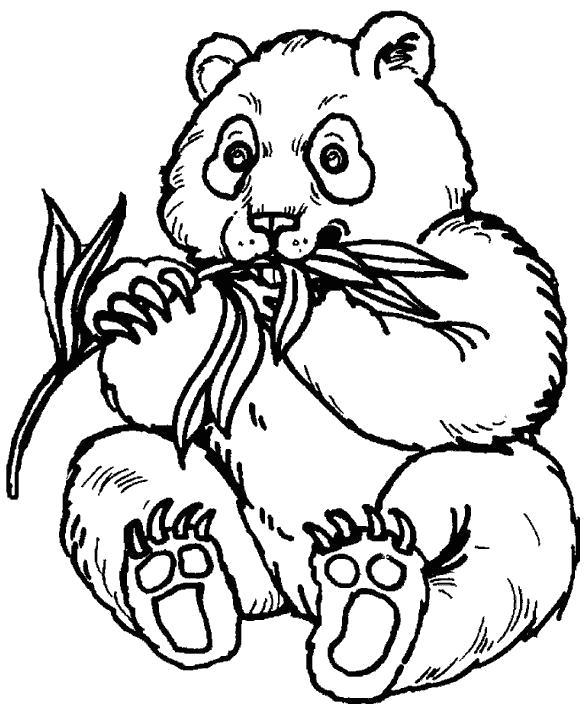 Раскраска панда ест  траву. Скачать медведь, Панда.  Распечатать Дикие животные