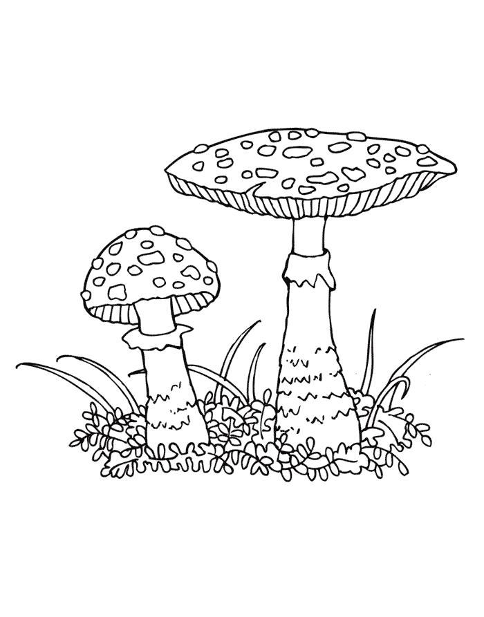 Раскраска Мухомор   грибы. Скачать гриб.  Распечатать растения