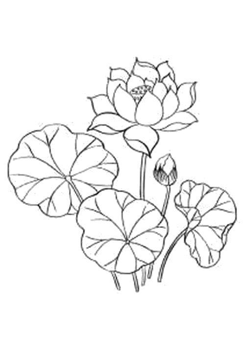 Раскраска  Лотос и листья. Скачать Цветы.  Распечатать Цветы