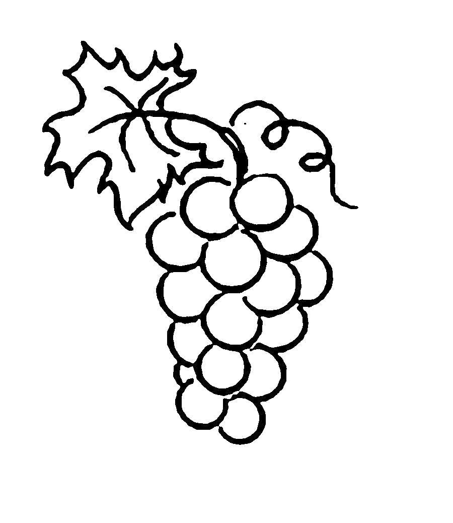Раскраска  ягоды винограда. Скачать виноград.  Распечатать ягоды