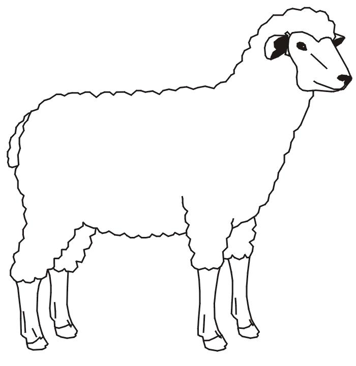 Раскраска Много рисунков с овечками. Скачать Шаблон.  Распечатать Шаблон