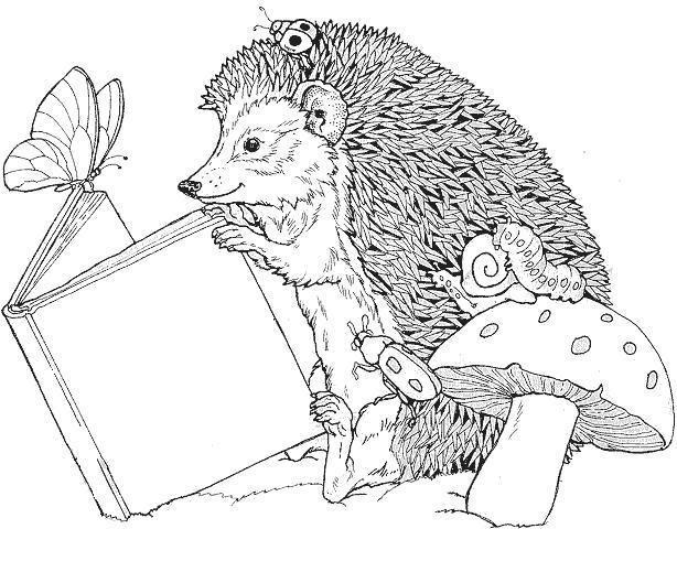 Раскраска Ежик читает книгу. Скачать .  Распечатать