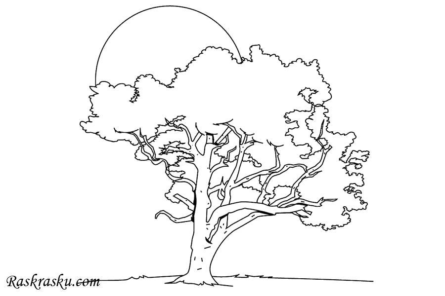 Раскраска Липа. Скачать деревья.  Распечатать деревья